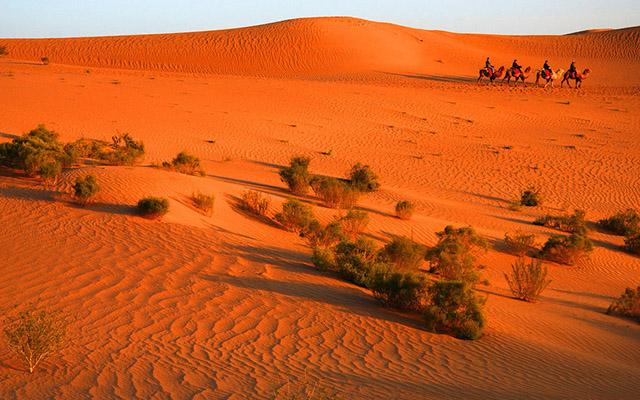10月10日:额济纳旗胡杨林景区自由活动-中国最美秋景 额济纳旗 大漠